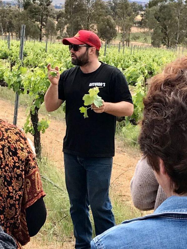 Antonio's Vineyard Tour
